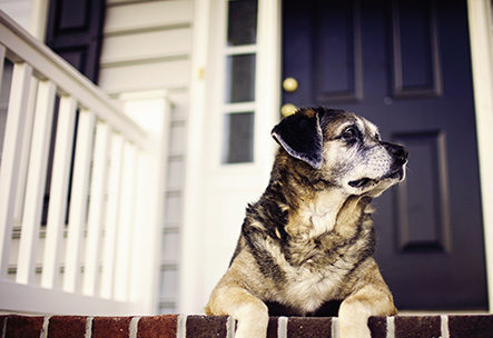 a dog sits on the front porch steps