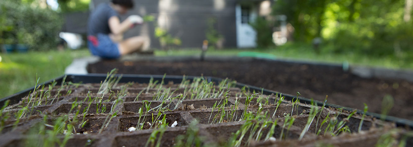 image of a garden with small sprouts coming out of the ground linking to a Guardian Credit Union page.